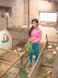 Colcha - Carina guinea pigs
